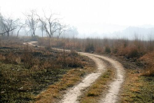 Jungle Path Jim Corbett National Park