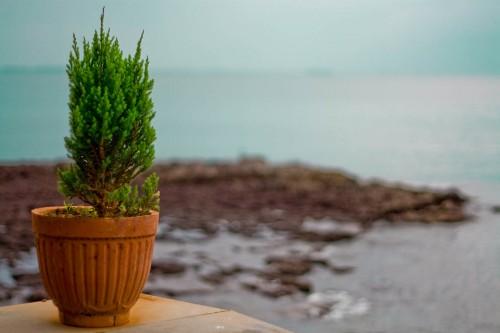 Flower pot overlooking sea