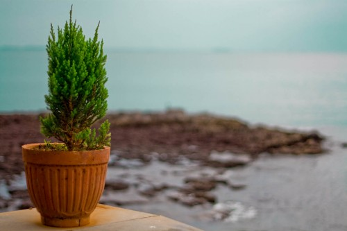 Flower pot overlooking sea