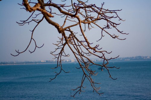 Dead branch with sea background