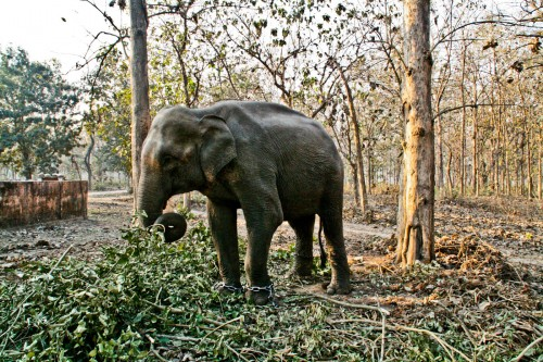 Elephant at Jim Corbett national park