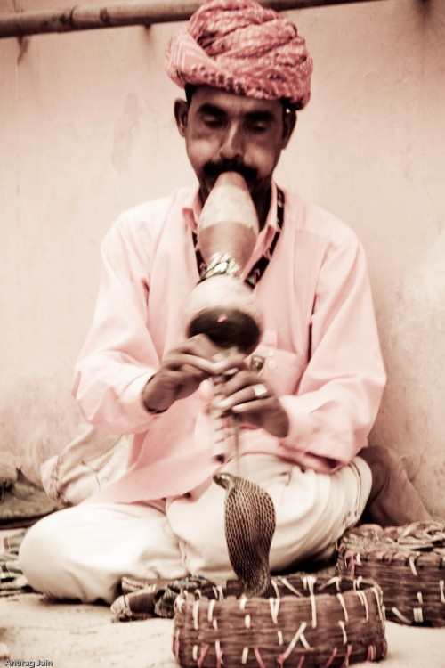 Snake charmer at Rajasthan, Animal, People, Rajasthan, Reptile, Snake, Snake charmer, Photographer Anurag Jain