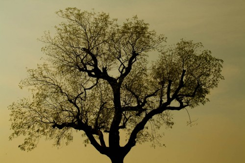 Tree silhouette, Nature, Silhouette, Tree, tree silhouette, wallpaper, Photographer Anurag Jain