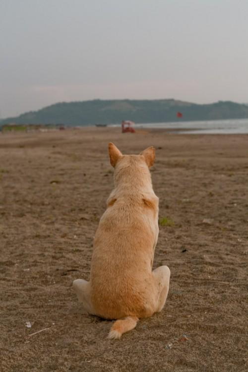 Dog overlooking sea