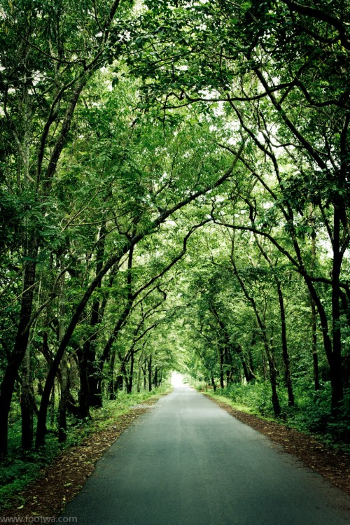 The woods are lovely dark and deep, empty road, Forest, Goa, Nature, road, road in forest, road in woods, Top 10, Trees, wallpaper, woods, Photographer Anurag Jain