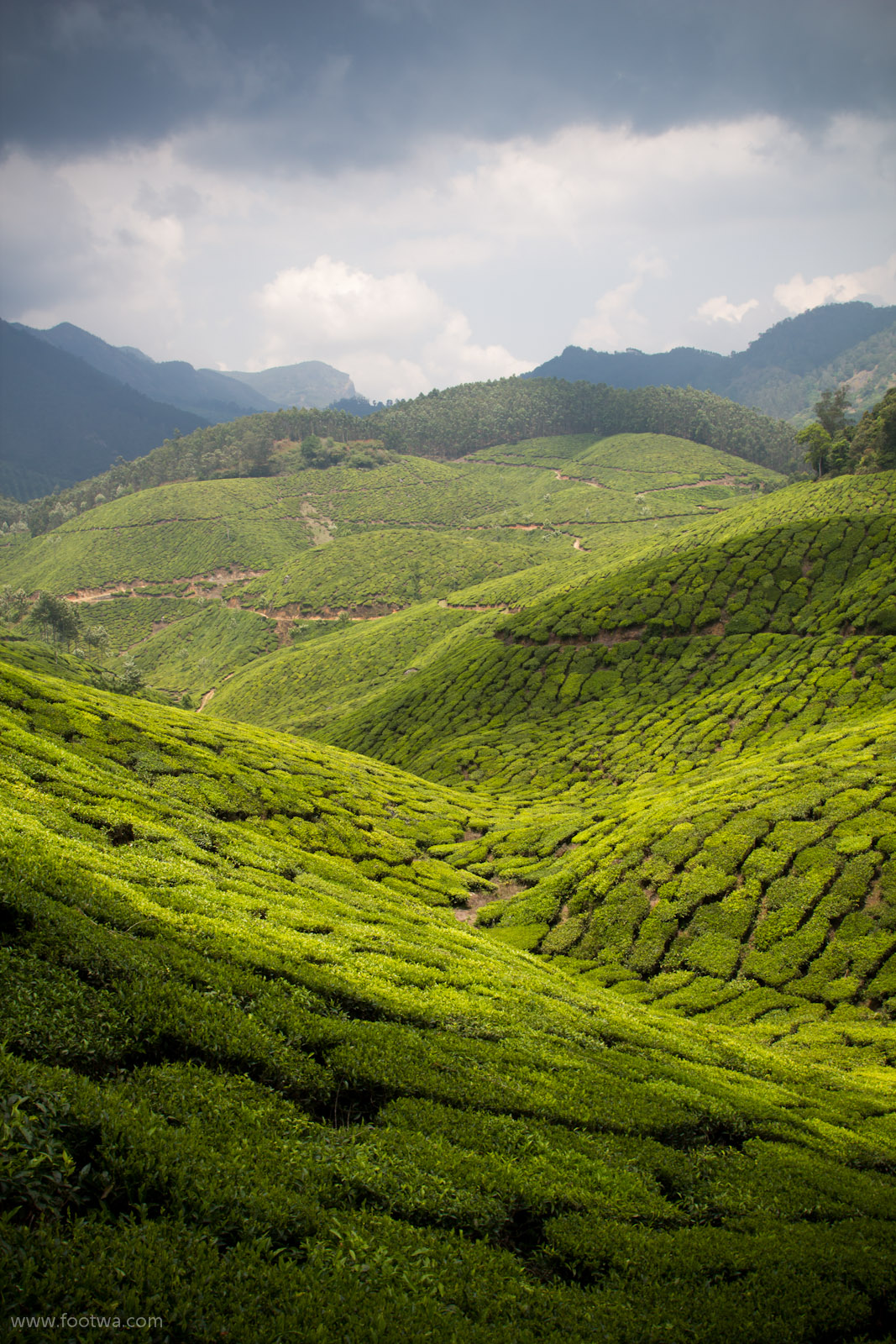 The Alluring Land Of Munnar Footwa