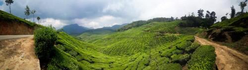 Munnar tea plantation panorama