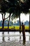 Bird at Kerala backwater