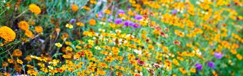 Patch of flowery wonder