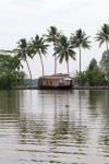 Palm tree reflection at Kerala backwaters