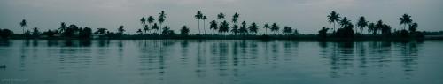 Palm tree silhouette at Kerala backwaters
